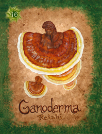 15 Ganoderma Card Copy