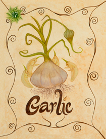 16 Garlic Card Copy