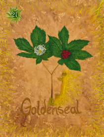 20 Goldenseal Card Copy