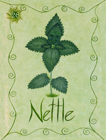 25 Nettle Card Copy