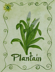 29 Plantain Card Copy