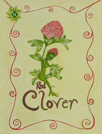 30 Red Clover Card Copy