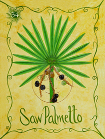 34 Saw Palmetto Card Copy