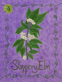 35 Slippery Elm Card Copy