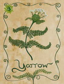 43 Yarrow Card Copy