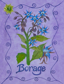 5 Borage Card